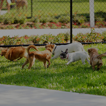 Large Dog Park at Park Central Apartments
